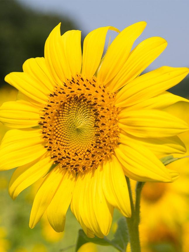 nanotech-flower-seed